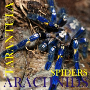 Arachnids and related products